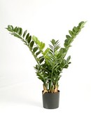 Kunstplant Zamioculcas smaragd