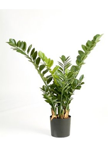 Kunstplant Zamioculcas smaragd - (Zijdeplant)