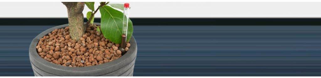 Hydrocultuur planten kopen kopen