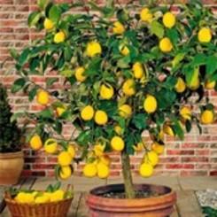 Fruitbomen kopen