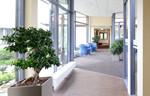Vier redenen voor planten op kantoor