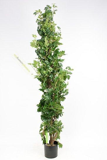 Kunstplant Cissus plant - (Zijdeplant)