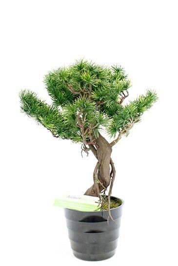 Kunstplant Bonzai pinus - (Zijdeplant)