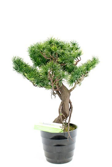 Kunstplant Bonzai pinus