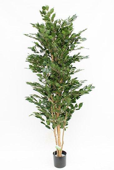 Kunstplant Ficus nitida exotica - (Zijdeplant)