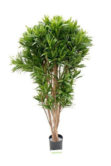 Kunstplant Dracaena reflexa jamaica - (Zijdeplant)