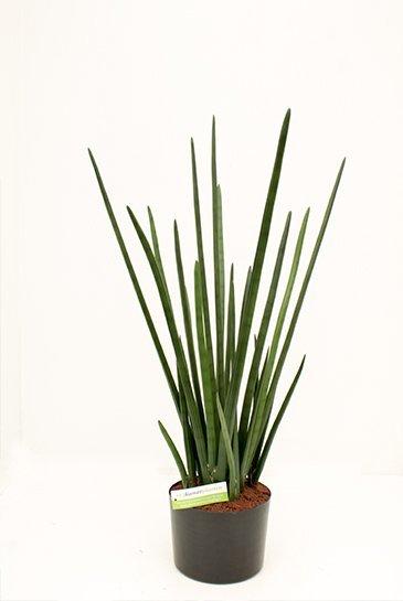 Kunstplant Baton plant - (Zijdeplant)
