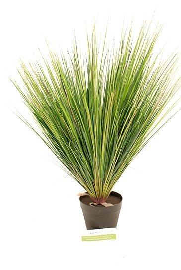 Kunstplant Grass onion - (Zijdeplant)