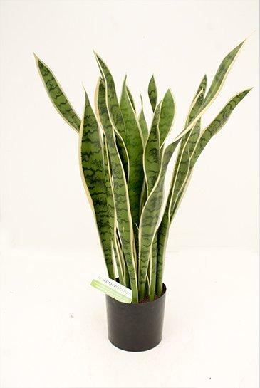 Kunstplant Sansevieria Laurentii - (Zijdeplant)