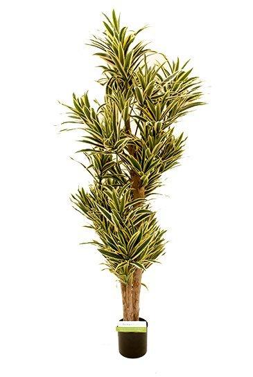Kunstboom Pleomele Song of India - (Zijdeplant)