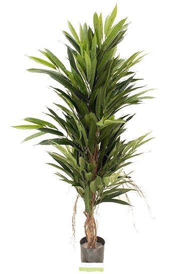 Kunstplant Longifolia de luxe - (Zijdeplant)
