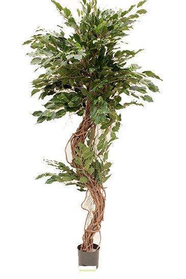 Kunstplant Ficus corkscrew exotica