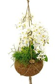 Kokodama Jungle Orchid White
