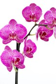 Orchidee Funktion