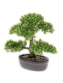 Kunstplant Bonsai Ficus mini