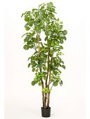 Kunstplant Polyscias Tree  (591 bladeren)