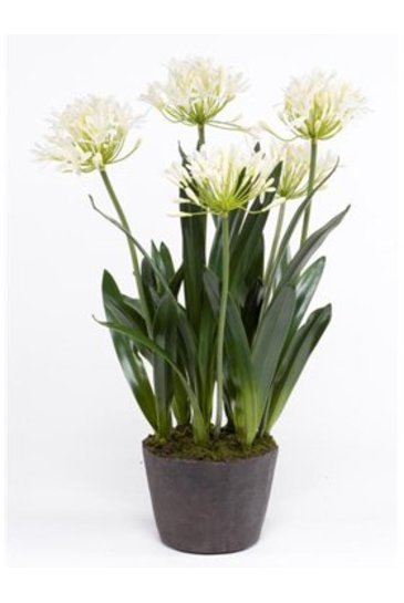 Kunstplant Agapanthus Soiled cream - Zijdeplant