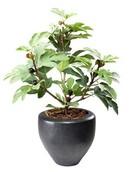 Kunstplant Fig tree