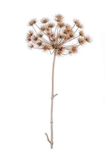 Kunstplant Heracleum Stam grey - Zijdeplant