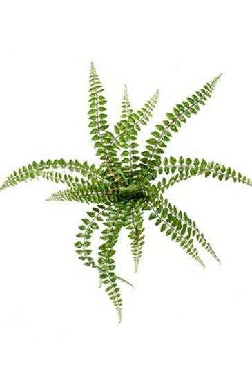 Kunstplant Fern pellaea Bush green (18 bladeren) - Zijdeplant
