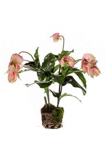 Kunstplant Medinella soiled - - Zijdeplant
