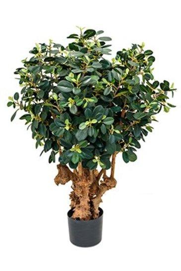 Kunstplant Ficus panda botanic tree  (1500 bladeren) - Zijdeplant