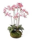 Kunstplant Phalaenopsis Dark pink soiled with moss