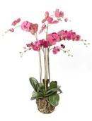 Kunstplant Phalaenopsis plant W. moss beauty