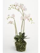 Kunstplant Phalaenopsis plant W. moss roze