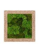 Livepicture Naturescast 50cm * 50cm