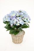 Kunstplant Hortensia Blue