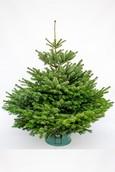 Kerstboom Nordmann Gezaagd