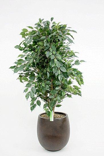 Kunstplant Ficus exotica de luxe - (Zijdeplant) - in D-Lite Balloon
