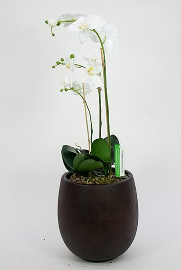 Kunstplant Orchidee Phaleanopsis - (Zijdeplant) - in D-Lite Balloon