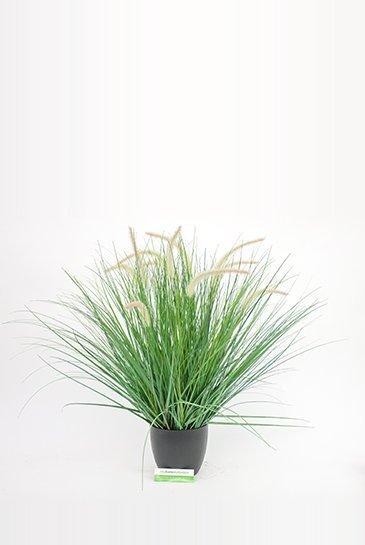 Kunstplant Pennisetum Woodside - Zijdeplant