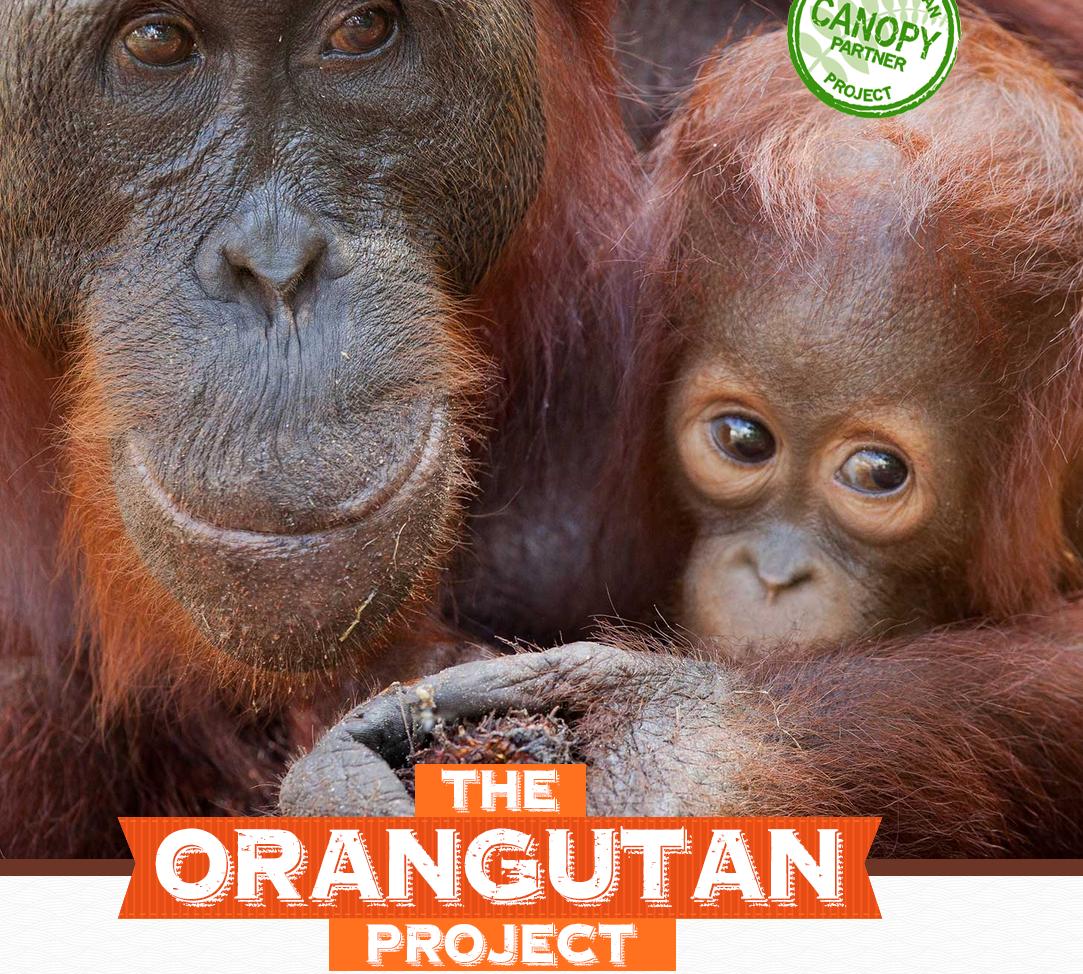 Oranguatan Project