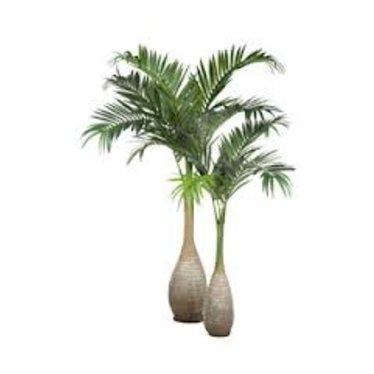 Palm Groen H270cm