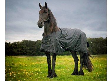 Friese en Barok type paard