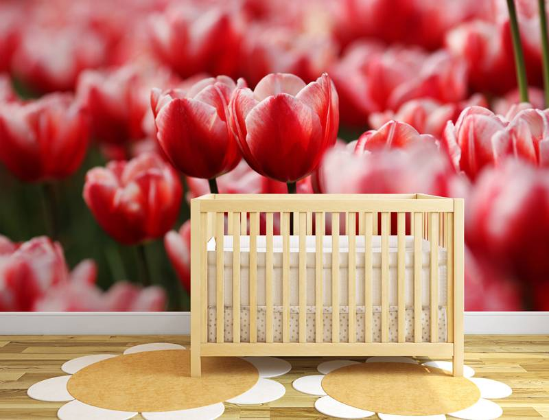 Zelfklevend fotobehang 'rode tulpen' - DecoDog