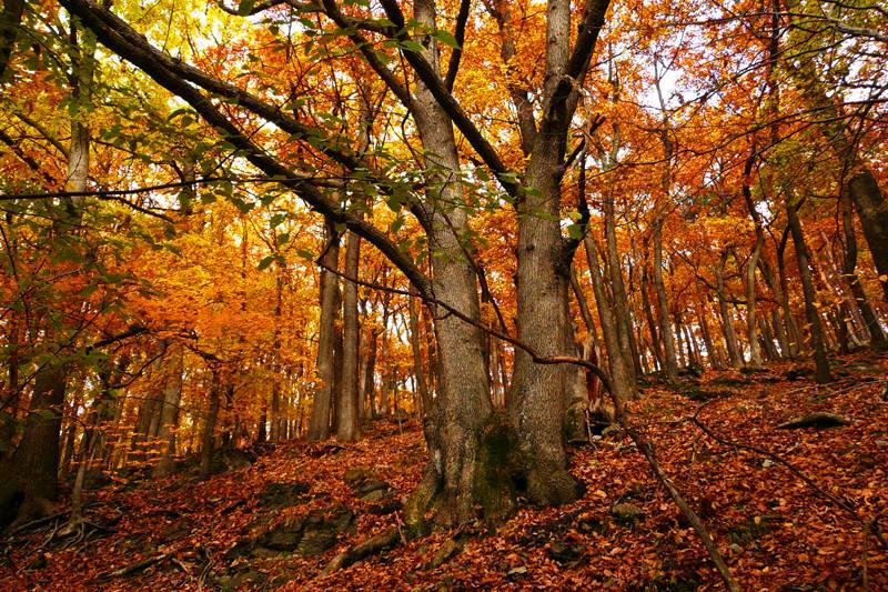 zelfklevend-fotobehang-herfst-in-het-bos.jpg