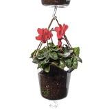 Hanging Pot / Glass