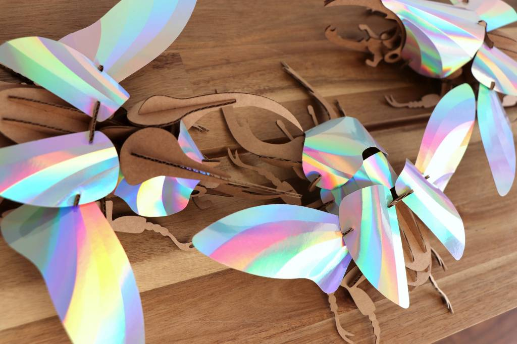 Paper Beetle / Stag / Rainbow