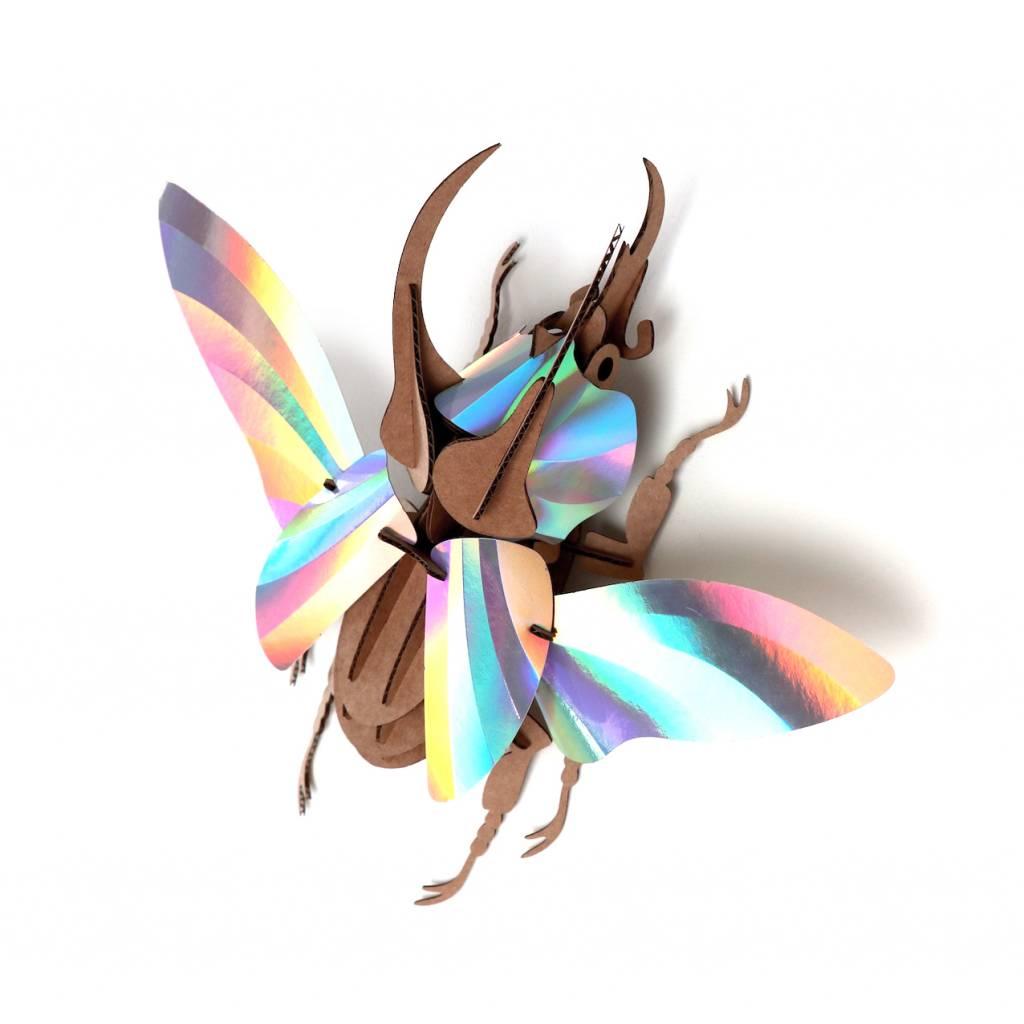 Paper Beetle / Atlas / Rainbow