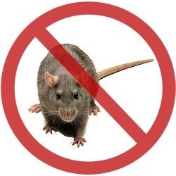 Muizen verjagen met geluid.