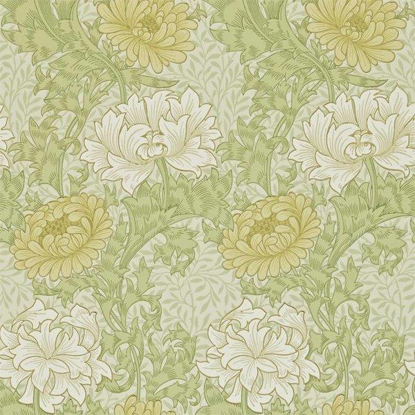 Chrysanthemum - Pale Olive