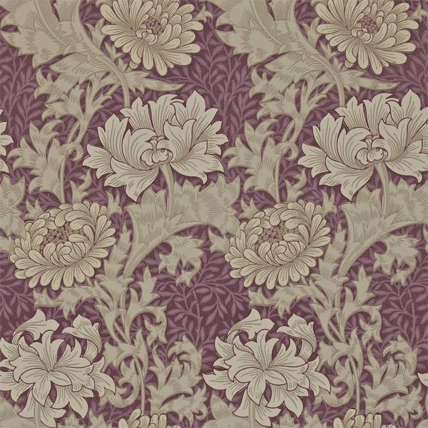 Chrysanthemum - Wine DARW-212548