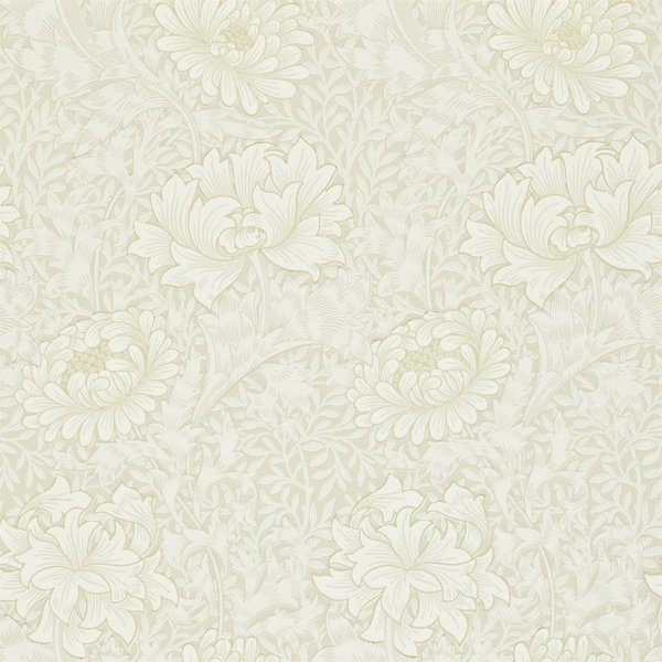 Chrysanthemum Chalk 212546