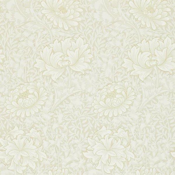 Chrysanthemum - Chalk DARW-212546