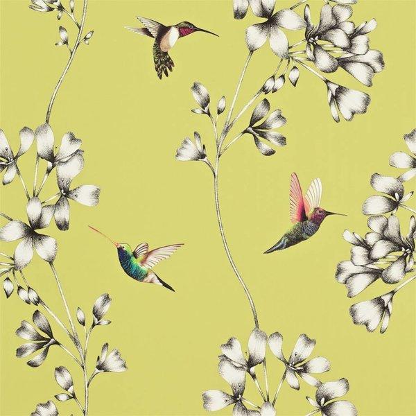 Amazilia Gooseberry (Mosterd Geel) 111061