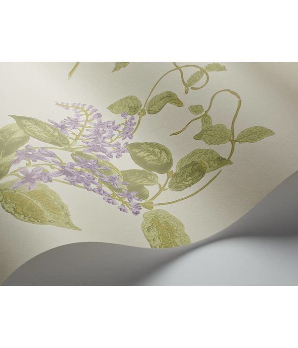 Cole-Son Madras Violet Olive, Lavender, (Groen, Paars) 100/12056 Behang